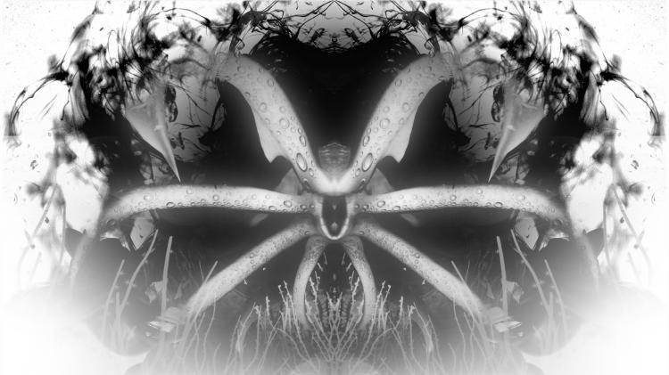 Narcosis_Art__Rorschach